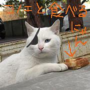 Lamento好きすぎて猫好きに。