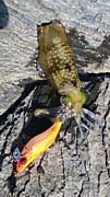 石川県アオリイカや旬のお魚