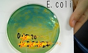 E.coli☆