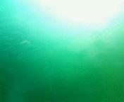 ��GREEN�� �С����ʥ���