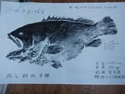 O.N.fish