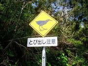 沖縄方言講座だよん!