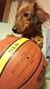 basket team 【amor.】