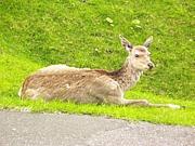 エゾ鹿肉を食し語り広める会