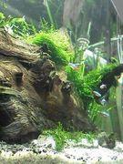 Tropical Fish〜熱帯魚〜