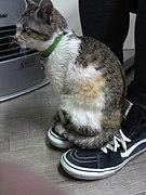 ネコより猫背( ̄▽ ̄;)