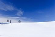 真夏の雪原