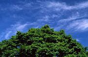 信州風景写真部