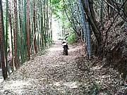 山口県の道路がスキ