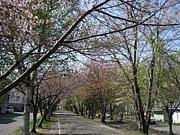 ジョギング in 札幌・北海道