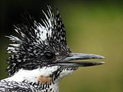 鳥見夫婦の野鳥専科