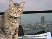 タイで猫飼ってます