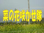 ☆菜の花咲かせ隊☆