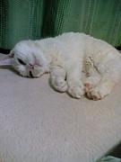 猫になりたぃ From Obihiro