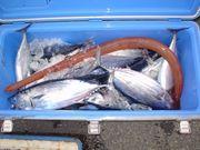 静岡海釣り倶楽部
