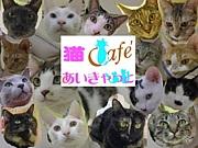 猫カフェあいきゃっと福島店