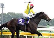 ☆MIRACLE競馬★