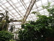 温室に囚われた蝶たちへ