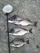 神戸海釣り談話室