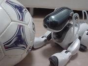 フトサル:FC AQUA