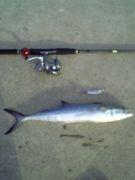 青物釣り好き集まれ!