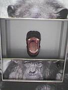 野毛山動物園アニマルボックス!