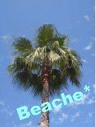 Beache*Life