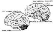 神経工学アップデート