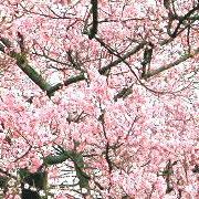 お花見やるぜ!2007