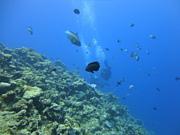 東海 ダイビング 友の輪