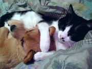 犬も猫も両方大好き