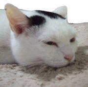 日本猫倶楽部
