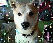 2008年1月生まれ in愛知