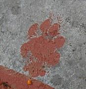 動物足跡見つけ隊