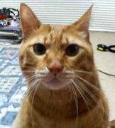 ウチの猫マイケルです!