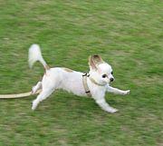 【鹿児島】愛犬家の集うコミュ