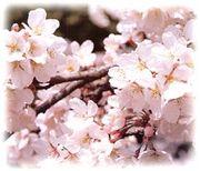 春休み生まれ