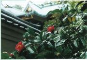 越木岩神社(こしきいわ)