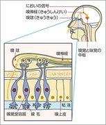 23.嗅覚・味覚の科学