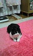 猫大好き〜ニャーン