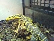 爬虫類好きならマイミクOK