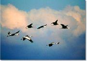 多くの大学 渡り鳥・・・