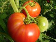 はるばる農園の野菜