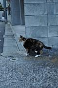 【職業】野良猫カメラマン