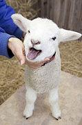 大学生迷える仔羊たちの会 β版