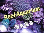 リーフアクアリウム〜海を創る〜
