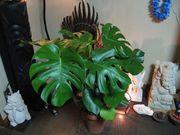 観葉植物とアジアン雑貨 HR
