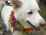 kin130白い宇宙の犬