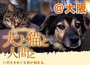 大阪の犬/猫 殺処分ゼロを目指す