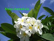 aloha-mamahula